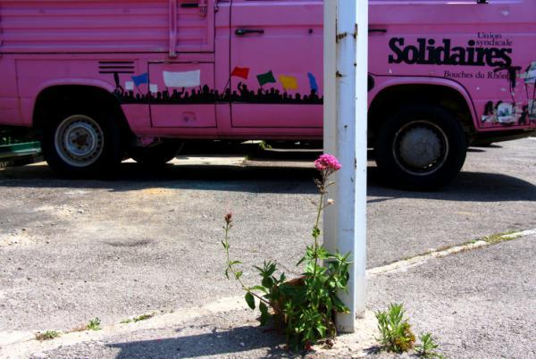 Rose goudron - Marseille 2013