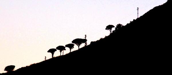 Les arbres de Sisyphe - Sicile 2013