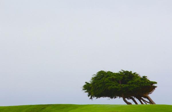 Vent debout - Californie 2014