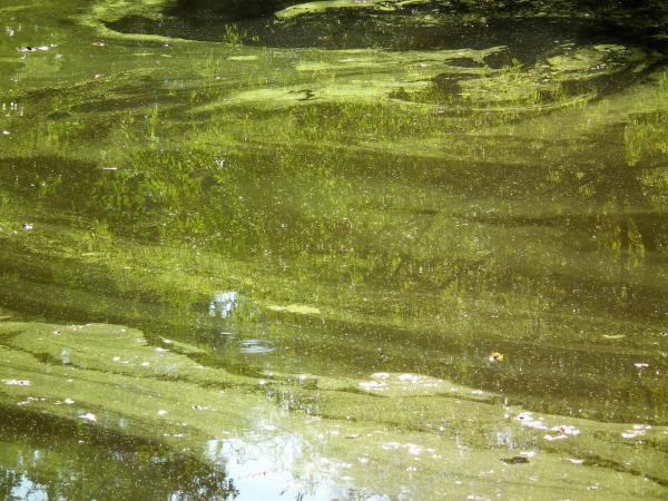 Lavis en vert - Portugal 2010