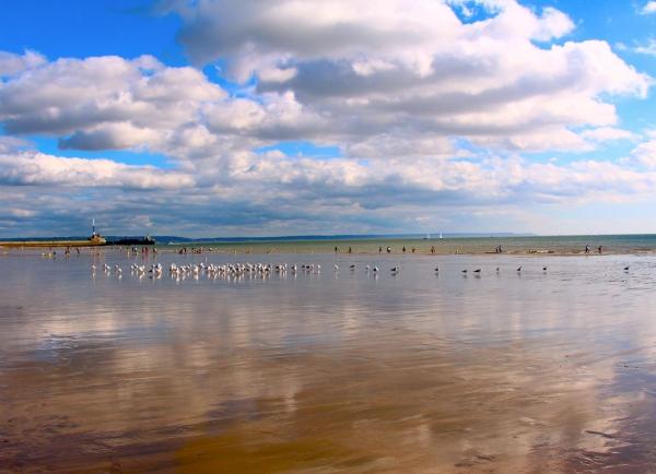 Miroir aux oiseaux - La Havre 2014